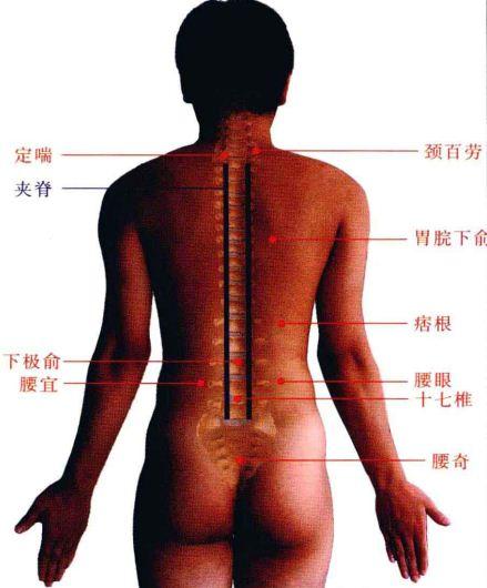 十七椎穴的准确位置图