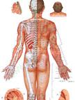 人体经络穴位图高清男性版针灸挂图背面