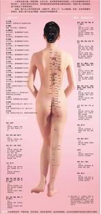 人体常用经络穴位女性版背面高清彩色图