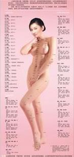 人体常用经络穴位女性版正面高清彩色图