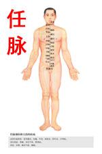 奇经八脉任脉图高清版人体穴位图