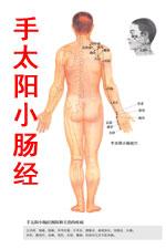 手太阳小肠经图高清版人体穴位图