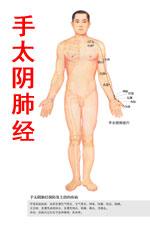 手太阴肺经图高清版人体穴位图