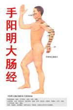 手阳明大肠经图高清版人体穴位图