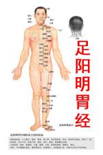 足阳明胃经高清版人体穴位图