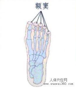 脚底穴位图(脚底反射区)--额窦位置