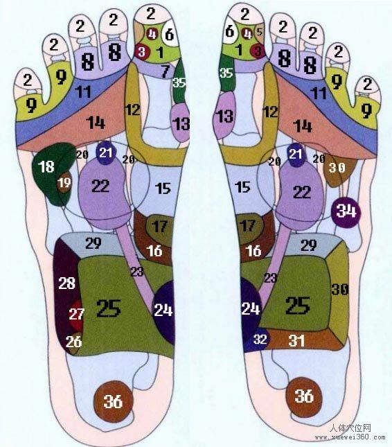 脚底穴位图(脚底反射区)