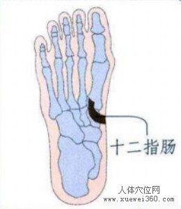 脚底穴位图(脚底反射区)--十二指肠位置