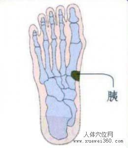 脚底穴位图(脚底反射区)--胰位置