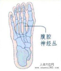 脚底穴位图(脚底反射区)--腹腔神经丛位置
