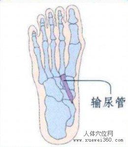 脚底穴位图(脚底反射区)--输尿管位置