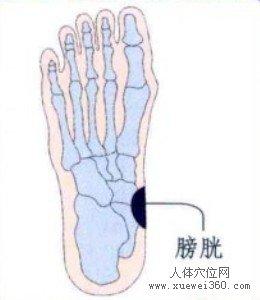脚底穴位图(脚底反射区)--膀胱位置