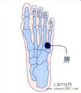 脚底穴位图(脚底反射区)--脾位置