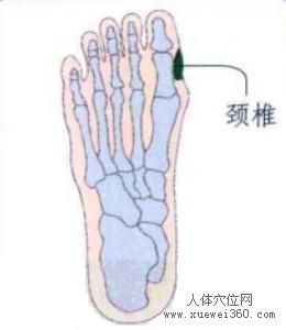 脚底穴位图(脚底反射区)--颈椎位置